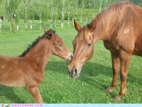 Cessna and Foal
