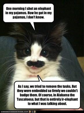 Groucho Meowx