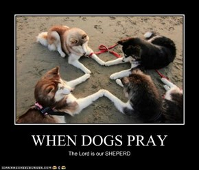 WHEN DOGS PRAY