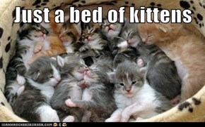 Just a bed of kittens