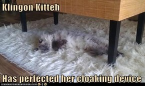 Klingon Kitteh  Has perfected her cloaking device