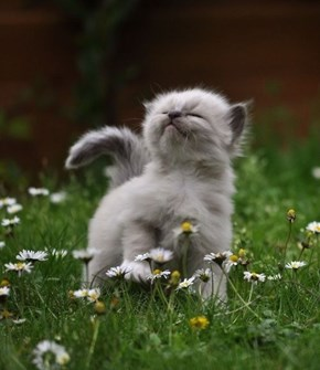 Cyoot Kitteh of teh Day: Stop and Smell the Flowers