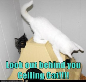 Look out behind you Ceiling Cat!!!!