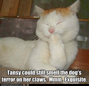 Tansy could still smell the dog's terror on her claws.  Mmm.  Exquisite.