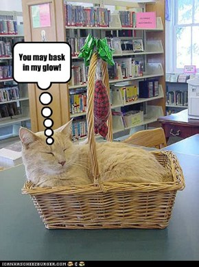 What to do when encountering a basket cat