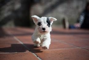 Cyoot Puppy ob teh Day: Heer Kums teh Cyooot!