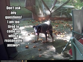 Don't ask  any questions! I am too tired to come up with  a reasonable answer!