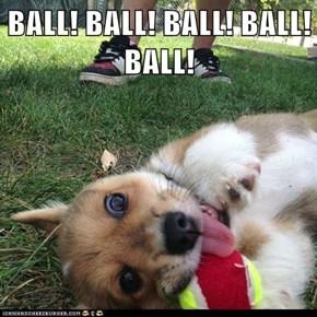 BALL! BALL! BALL! BALL! BALL!