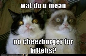 wat do u mean  no cheezburger for kittehs?