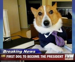 Breaking News - FIRST DOG TO BECOME THE PRESIDENT