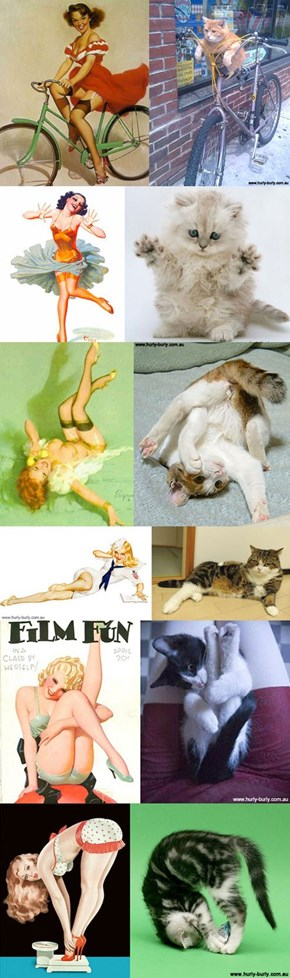 Cats That Look Like Pinup Girls