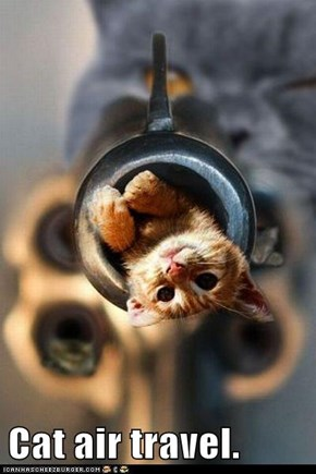 Cat air travel.