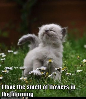 I love the smell of flowers in the morning