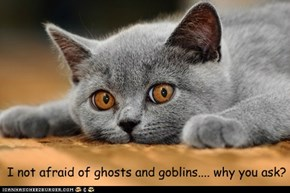 I not afraid of ghosts and goblins.... why you ask?