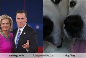 romney/ wife Totally Looks Like dog/dog