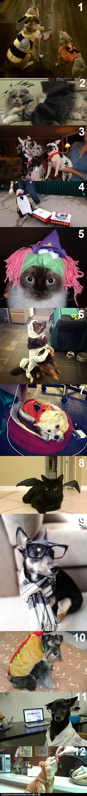 Vote for Your Favorite Cheezburger Employee Pet Costume!