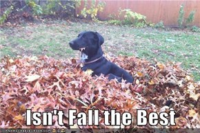 Isn't Fall the Best