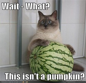 Wait - What?  This isn't a pumpkin?