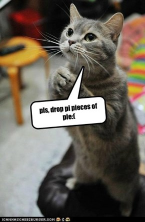 smart kitty knows his stuff