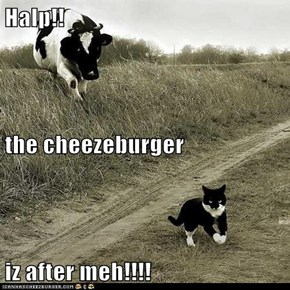 Halp!! the cheezeburger  iz after meh!!!!