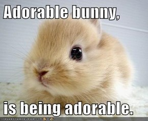 Adorable bunny,  is being adorable.