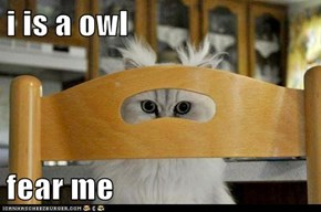 i is a owl  fear me