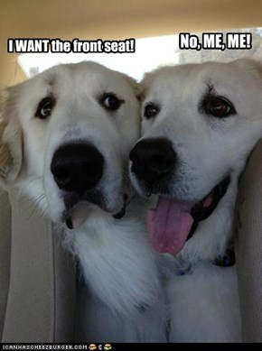 Remember those days you fought over who got the front seat when you were a child? Well, dogs do, too.