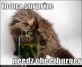 toona surprize  needz cheezburger