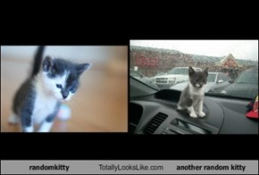 randomkitty Totally Looks Like another random kitty