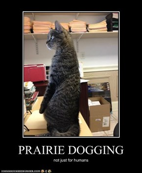 PRAIRIE DOGGING