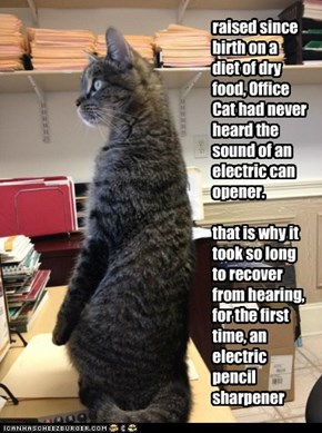 raised since birth on a diet of dry food, Office Cat had never heard the sound of an electric can opener.  that is why it took so long to recover from hearing, for the first time, an electric pencil sharpener