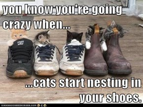 you know you're going crazy when...  ...cats start nesting in your shoes.