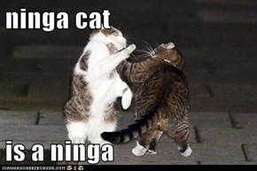 ninga cat  is a ninga