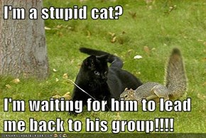 I'm a stupid cat?  I'm waiting for him to lead me back to his group!!!!