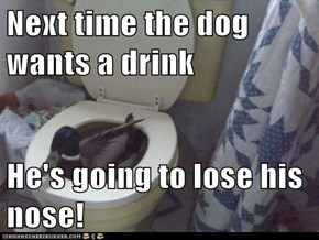 Next time the dog wants a drink  He's going to lose his nose!