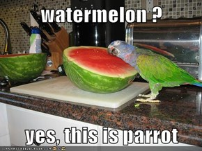 watermelon ?  yes, this is parrot
