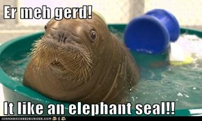 Er meh gerd!  It like an elephant seal!!