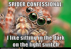 SPIDER CONFESSIONAL:   I like sitting in the dark       on the light switch
