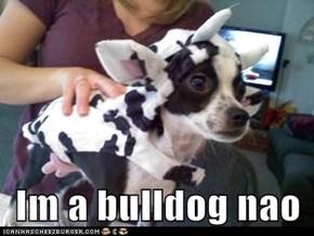 Im a bulldog nao