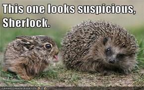 This one looks suspicious, Sherlock.