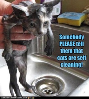 Somebody PLEASE tell them that cats are self cleaning!