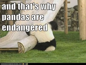 and that's why pandas are endangered