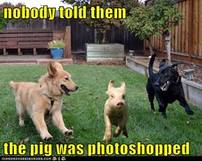 nobody told them   the pig was photoshopped