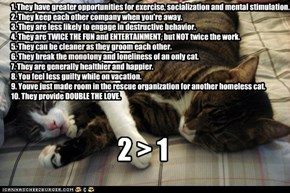 Top Ten Reasons Two Cats Are Better Than One