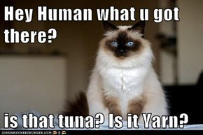 Hey Human what u got there?  is that tuna? Is it Yarn?