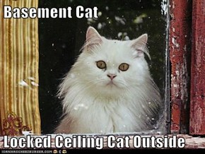 Basement Cat  Locked Ceiling Cat Outside