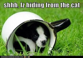 shhh, Iz hiding from the cat