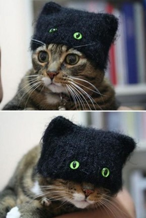 Nice Disguise, Cat