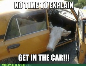 Get in the car!!!