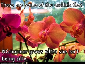 Everybody is good at something. Orchids are what brings out the best in me...next to the cats, of course